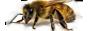 Курсы пчеловодства для начинающих